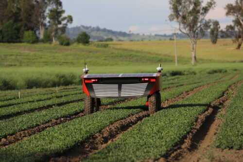 Agricultural business ladybug