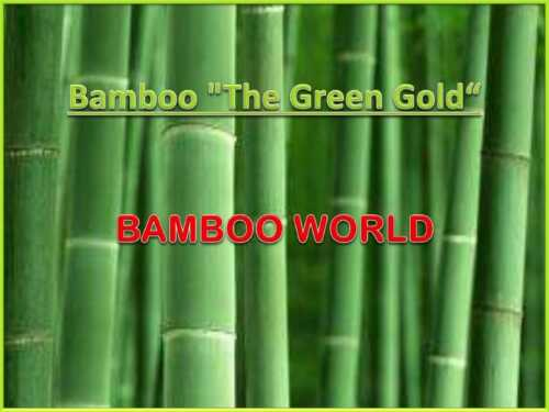 Bamboo Farm Business Plan Template Launch