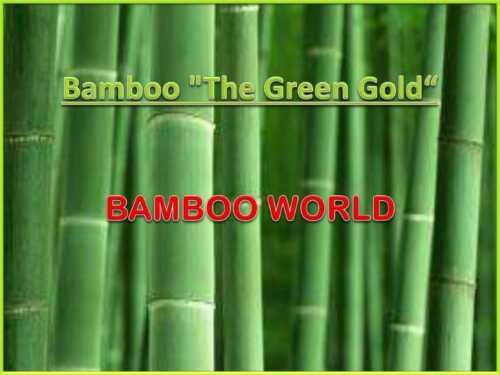 Bamboo Farm Business Plan Template Launch