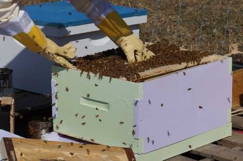 Beekeeping Farm Business Plan