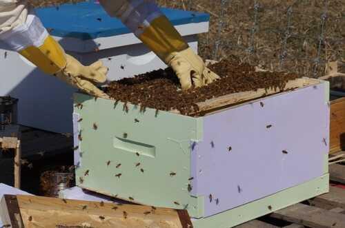 Beekeeping Farm Business Plan