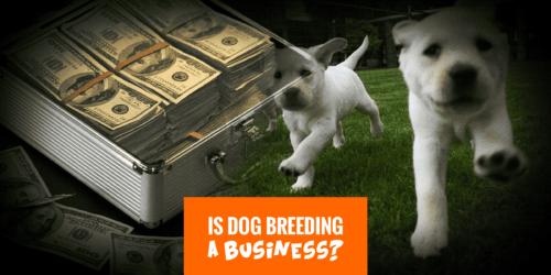 Breeding business