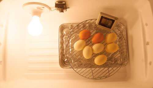 Buy or create your own egg incubator - which is the best
