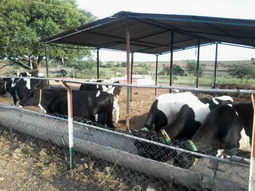 Dairy farming business from scratch