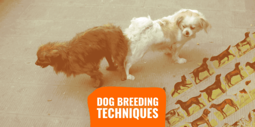 Dog breeding operate