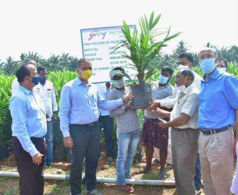 Launch  for oil palm plantation
