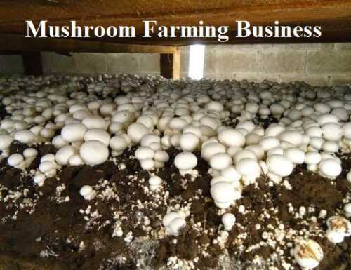 Launch of the mushroom farm business plan