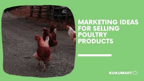 Marketing Ideas For Quickly Selling Poultry