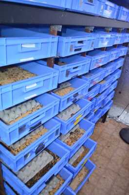 Mealworm breeding business