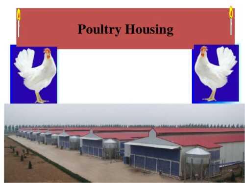 Poultry system selection