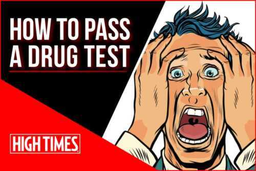 Preparing to take a drug test at work - a guide on how to quickly take a drug test