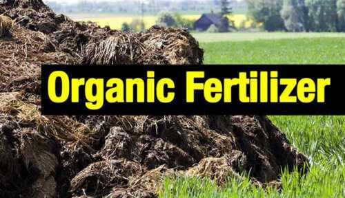 Production of organic fertilizers