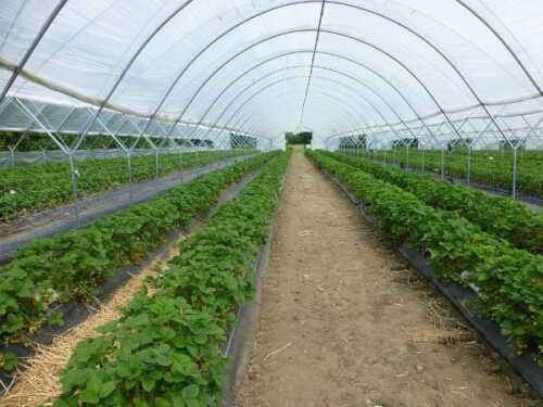 Qreenhouse on an organic farm  business plan