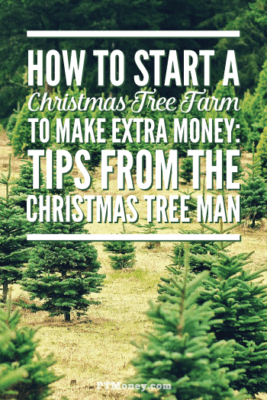Starting a Christmas tree business on the farm