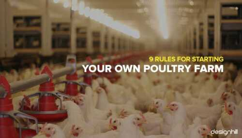 Tips for Growing Poultry Business