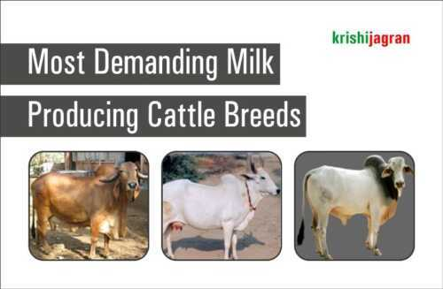 Top 10 Business Idea Opportunities For High Yielding Milk Cows