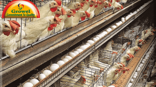 Ways to do market research . poultry farm