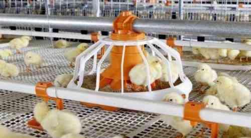 Лучшие 10 советов по росту / расширению вашего бизнеса птицефабрики