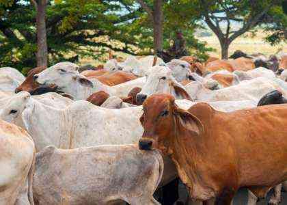 50 лучших идей для животноводства и животноводства на 2020 год