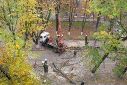 Начало бизнеса по удалению деревьев