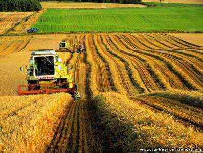 Начиная фермерский бизнес в Турции