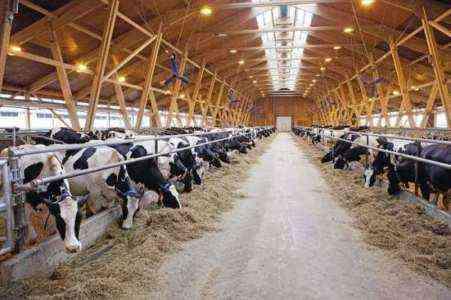 Топ 10 высокодоходных дойных коров Бизнес идеи Возможности