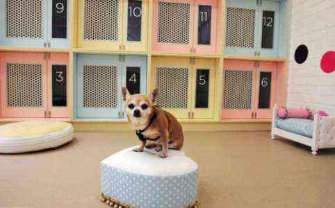 Образец шаблона бизнес-плана Pet Hotel
