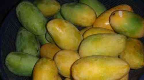 Как заработать на экспорте манго