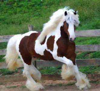 Образец шаблона бизнес-плана обучения лошади