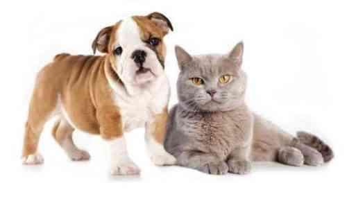 Создание компании по страхованию домашних животных