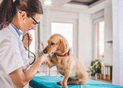 Как стать ветеринаром Полное руководство