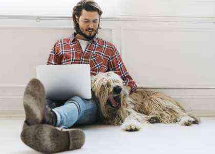 Начать бизнес по уходу за собакой дома