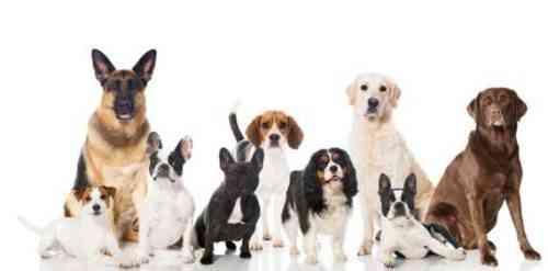 Ведение бизнеса по разведению собак 10 Правовые требования