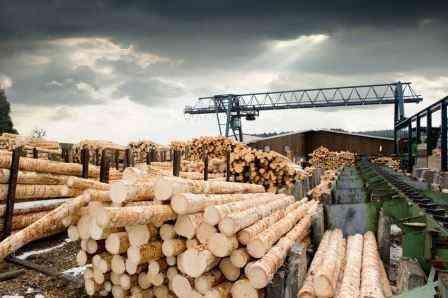 Создание шаблона бизнес-плана для лесозаготовительной компании