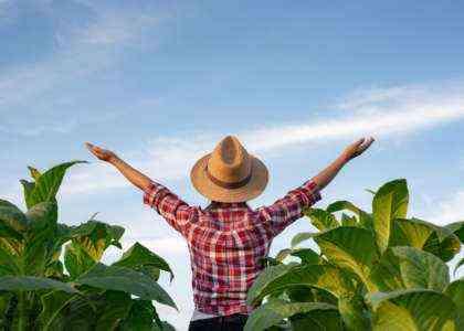 Начать фермерский бизнес с нуля без денег