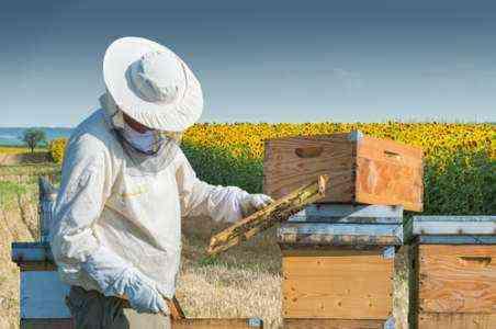 Образец шаблона бизнес-плана Honey Bee Farm