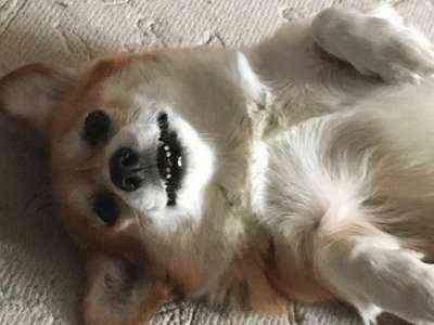 Образец шаблона бизнес-плана посадки собак