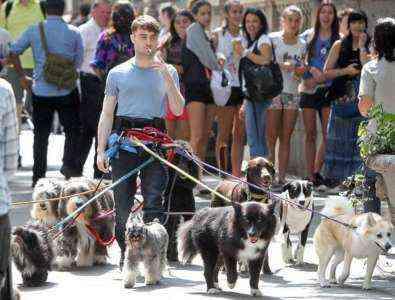 Как стать профессиональным собачником