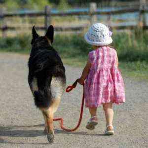 Начать бизнес по уходу за собаками из дома без денег