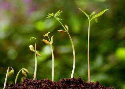 Открытие бизнеса по производству органических удобрений