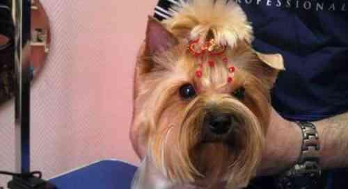 Запуск Pet Spa из дома Образец шаблона бизнес-плана