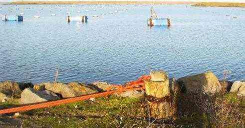 Запуск Тилапии Рыбоводческое хозяйство - Образец шаблона бизнес-плана