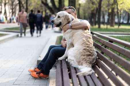 Начиная бизнес по выгула собак в детстве