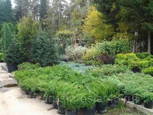 Образец шаблона бизнес-плана питомника растений
