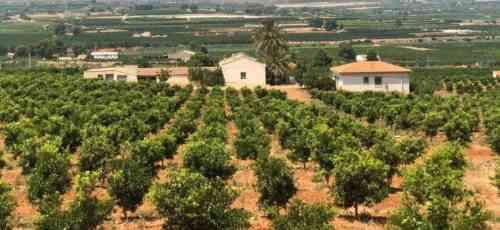 Как инвестировать в лесные фермы для получения высокой прибыли