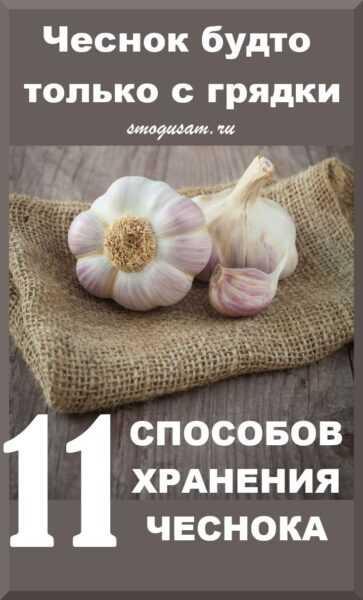 Выращивание чеснока: выращивание органического чеснока в домашнем саду