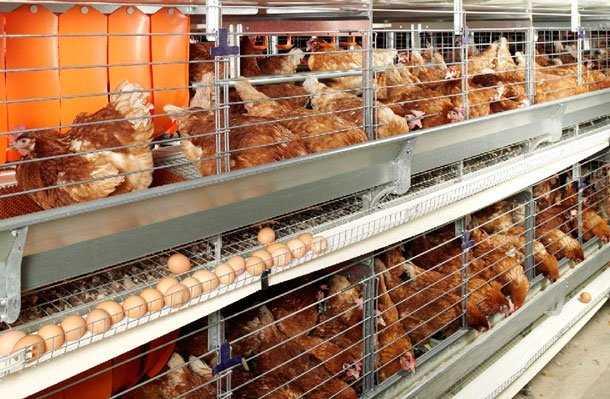 Оборудование для птицеводства: что вам нужно для птицеводства