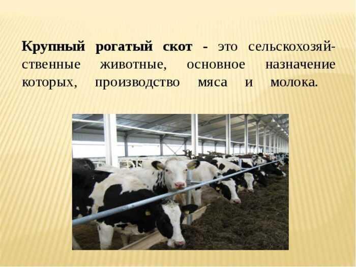 Разведение молочного скота: как разводить молочных коров (Руководство для начинающих)