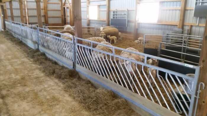 Помещение для овец: как сделать приют для овец