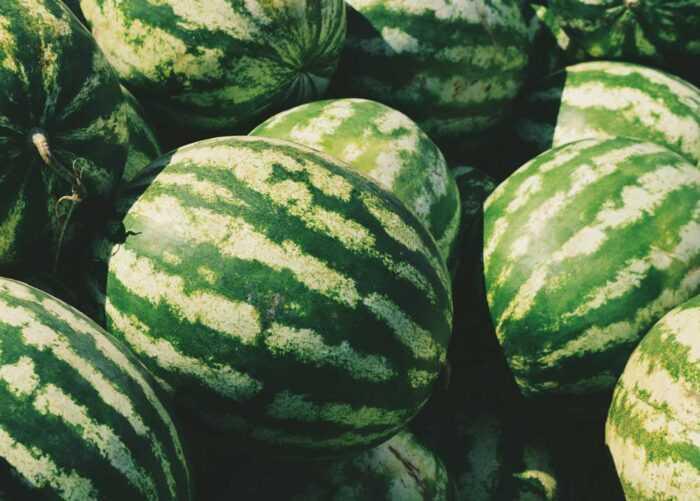 Выращивание арбузов: бизнес-план и руководство для начинающих